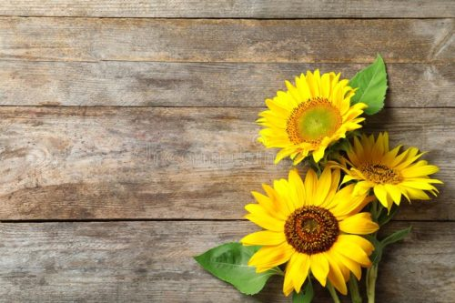 yellow-sunflowers-wooden-background-top-view-yellow-sunflowers-wooden-background-123860645